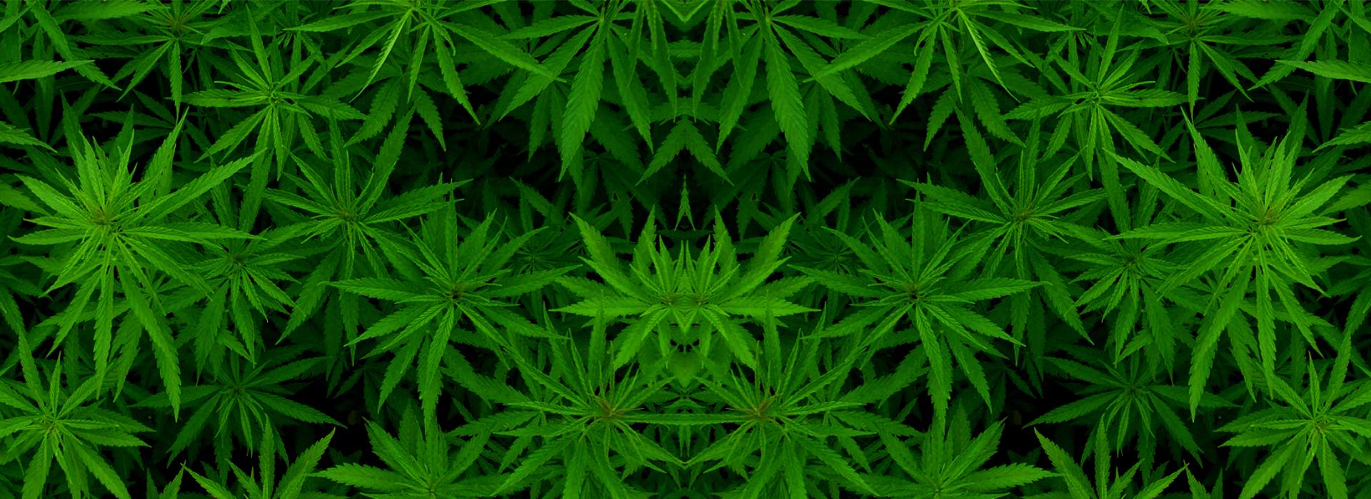 Cannabis Light Italia 100% Legale